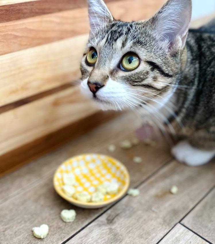 Croquettes et gâteries pour chats